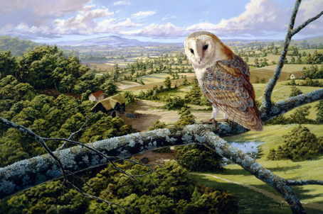 Wooden Jigsaw Puzzle - Barn Owl - 250 Pieces Wentworth