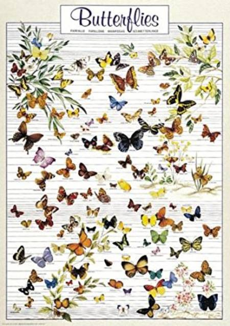 Jigsaw Puzzle - Butterflys (#2804N00025) - 1000 Pieces Ricordi