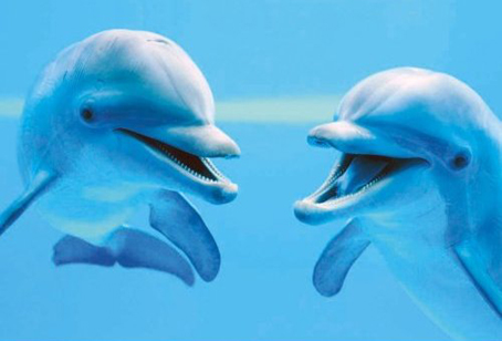 Jigsaw Puzzle - Two Close Dolphins (#39020) - 1000 Pieces Clementoni