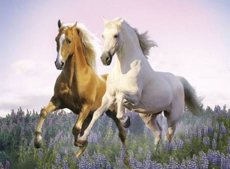 Jigsaw Puzzle - Free Horses (#30287) - 500 Pieces Clementoni