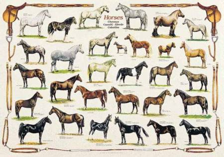 Jigsaw Puzzle - Horses (#2804N00013) - 1000 Pieces Ricordi