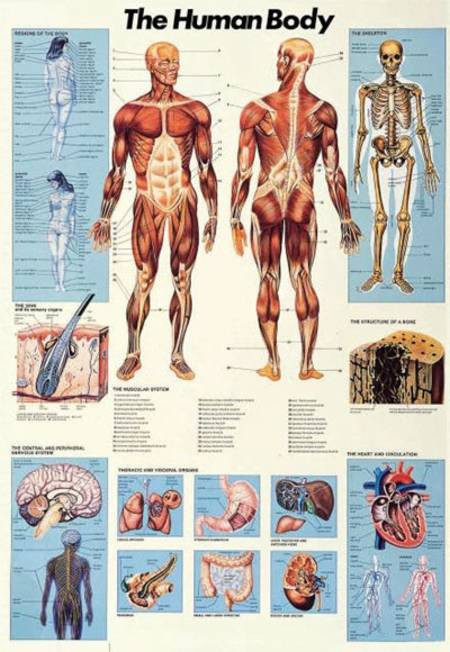 Jigsaw Puzzle - Human Body (#2804N00002) - 1000 Pieces Ricordi