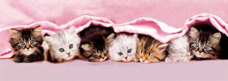 Jigsaw Puzzle - Kittens Under Blanket (#39127)  (Panoramic Image) - 1000 Pieces Clementoni
