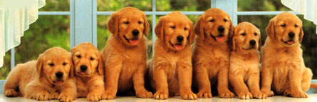 Jigsaw Puzzle - Puppies in a Row (Panoramic) - 1000 Pieces