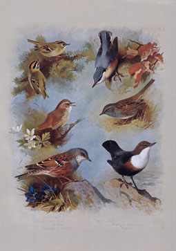 Wooden Jigsaw Puzzle - Wrens and Sparrows - 250 Pieces